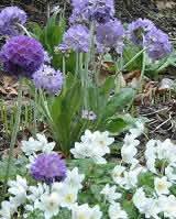 Essential Flower Garden Design For Home Landscaping