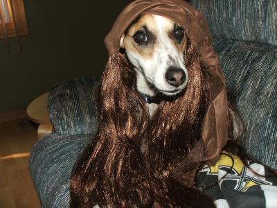 Captain Canine Jack Sparrow