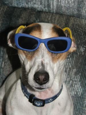 Doggone Cool