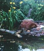 Garden Pond Design